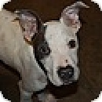 Adopt A Pet :: STERLING - MILWAUKEE, WI