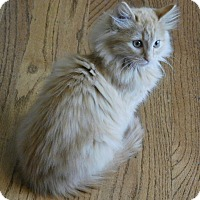 Adopt A Pet :: Carmel - Davis, CA