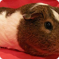 Adopt A Pet :: Digby - Williston, FL