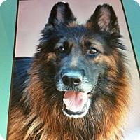 Adopt A Pet :: ATHENA VON ANNI - Los Angeles, CA