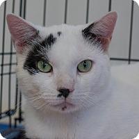 Adopt A Pet :: Edison - New York, NY