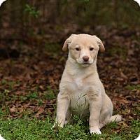 Adopt A Pet :: Regal - Groton, MA