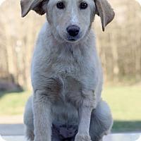 Adopt A Pet :: Blondie - Waldorf, MD