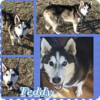 Adopt A Pet :: Teddy - Longview, TX