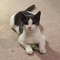 Adopt A Pet :: Fritzi - Carlisle, PA