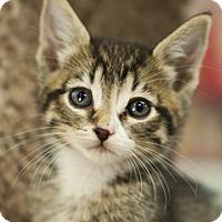 Adopt A Pet :: Angel - Great Falls, MT
