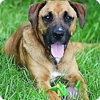 Adopt A Pet :: Zelda - Albany, NY