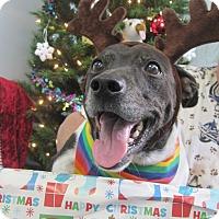 Adopt A Pet :: Oreo - Pompano Beach, FL