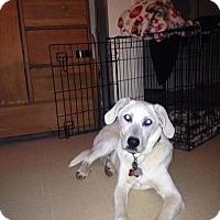 Adopt A Pet :: Hatch - Jacksboro, TN