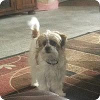 Adopt A Pet :: Gio - Playa Del Rey, CA
