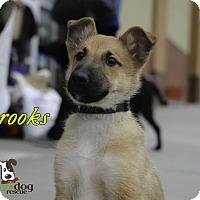Adopt A Pet :: Brooks - Alpharetta, GA