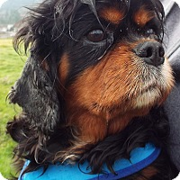 Adopt A Pet :: Bree - Grants Pass, OR