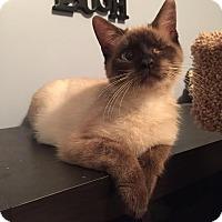 Adopt A Pet :: A..  Thea - Mooresville, NC