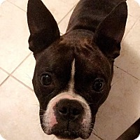 Adopt A Pet :: Sassy - Gainesville, FL