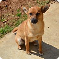Adopt A Pet :: Maggie - Granbury, TX
