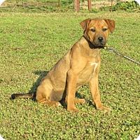 Adopt A Pet :: TYNE - Newburgh, NY