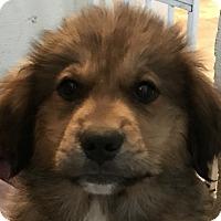 Adopt A Pet :: Matteo - Pennigton, NJ