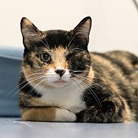 Adopt A Pet :: Palmarosa - Houston, TX