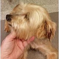 Adopt A Pet :: Rosie - Spring, TX