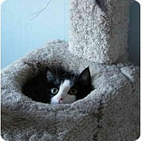 Adopt A Pet :: Miss Molly - Modesto, CA