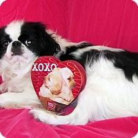Adopt A Pet :: Mickey - Aurora, CO