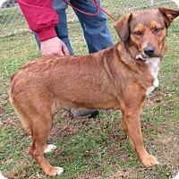 Adopt A Pet :: Saphy - Reeds Spring, MO