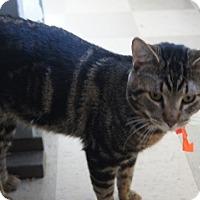 Adopt A Pet :: Big Boy - Libby, MT