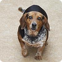 Adopt A Pet :: Mrs. Yarma Chubbs - Homewood, AL