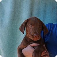 Adopt A Pet :: Tank - Oviedo, FL