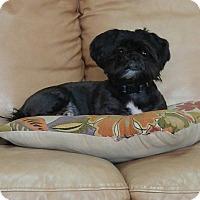 Adopt A Pet :: Capo - Jacksonville, FL