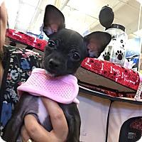 Adopt A Pet :: Alice - Brea, CA