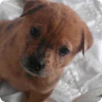 Adopt A Pet :: Goldilocks - fairy tale litter - Phoenix, AZ