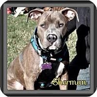 Adopt A Pet :: Sherman - Spring, TX