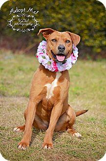 Labrador Retriever Mix Dog for adoption in Fort Valley, Georgia - Annabelle