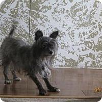 Adopt A Pet :: Princess  9 Years - C/S & Denver Metro, CO