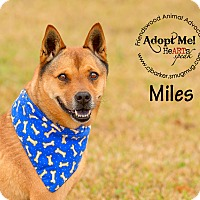 Adopt A Pet :: Miles - Friendswood, TX