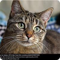 Adopt A Pet :: Sophie - Buchanan, TN