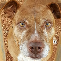 Adopt A Pet :: lady - Gainesville, GA