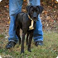 Adopt A Pet :: Ember - Clarkesville, GA