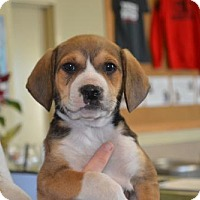Adopt A Pet :: Hopper - McKinney, TX