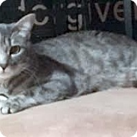 Adopt A Pet :: Jones - Davis, CA