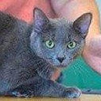 Adopt A Pet :: MARIBEL - Hampton, VA