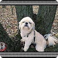 Adopt A Pet :: Happy - Berthierville / Sorel, QC