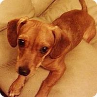 Adopt A Pet :: Raine - Silsbee, TX