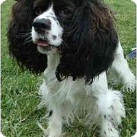 Adopt A Pet :: Cricket - Sugarland, TX