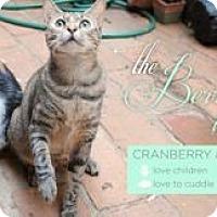 Adopt A Pet :: Berry Sisters - Colorado Springs, CO