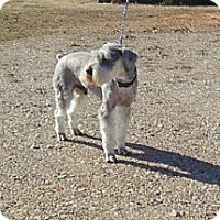 Adopt A Pet :: Morris - Crystal River, FL