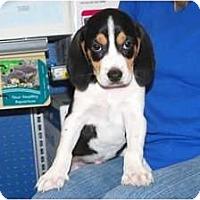 Adopt A Pet :: Tucker - Minneola, FL