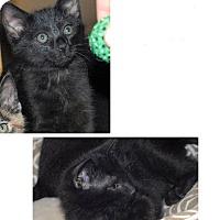 Adopt A Pet :: Guacamole & Pyewacket - McDonough, GA
