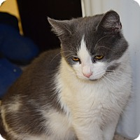 Adopt A Pet :: Frannie - Pottsville, PA